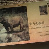 冰原奇跡-史前巨獸.長毛象特展, 安氏大唇犀