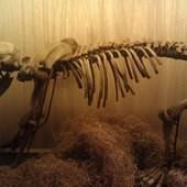 冰原奇跡-史前巨獸.長毛象特展, 洞熊幼體化石