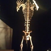 冰原奇跡-史前巨獸.長毛象特展, 洞熊化石