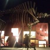冰原奇跡-史前巨獸.長毛象特展, 美洲野牛
