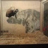 冰原奇跡-史前巨獸.長毛象特展, 鬣狗頭骨化石