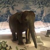 冰原奇跡-史前巨獸.長毛象特展, 長毛象