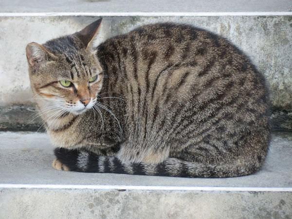 金瓜石, 勸濟堂, 小貓