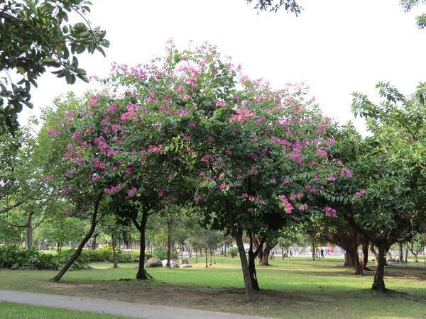 大安森林公園, 捷運大安森林公園站, 台北市大安區