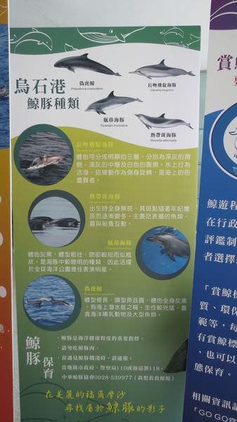 龜山島之旅, 賞鯨魚