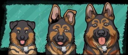 Criminal Case, 警犬商店, 德國牧羊犬