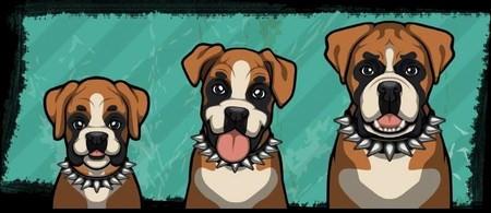 Criminal Case, 警犬商店, Boxer