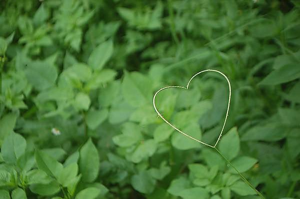闕小豪的100顆愛心 No.168 蛛兒的愛情故事