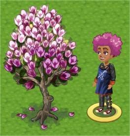ChefVille, Magonlia Tree