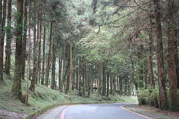 北部橫貫公路(明池森林遊樂區)