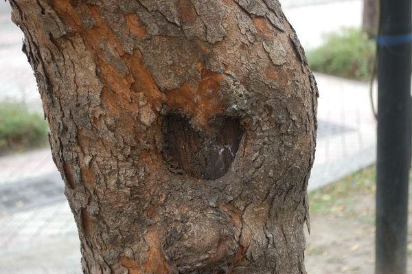 樹洞愛心, 高雄228和平公園