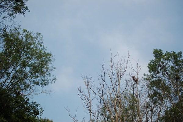 燕巢的天空