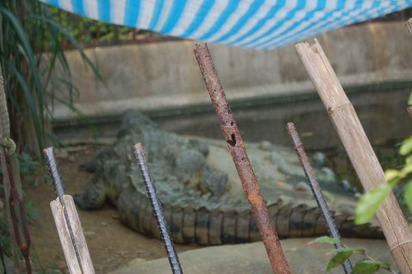 鱷魚, 新竹市立動物園