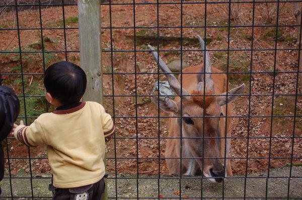 羚羊, 新竹市立動物園