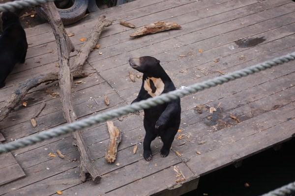 馬來熊, 新竹市立動物園