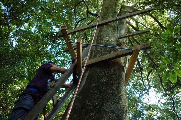 樹屋計畫7