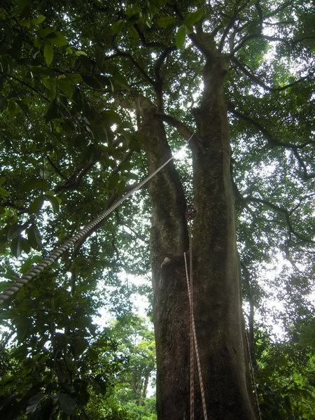 樹屋計畫5