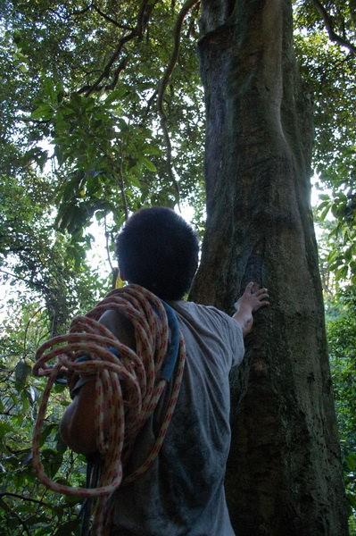 樹屋計畫3
