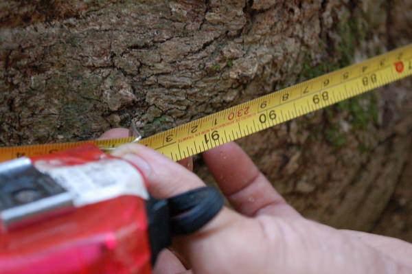 樹屋計畫2