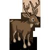 Buck 雄鹿