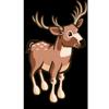 Deer Buck 斑點鹿