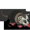 Opossum 負鼠