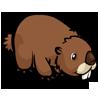 Woodchuck 土撥鼠