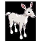 White Doe 白母鹿
