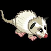 White Opossum 白負鼠