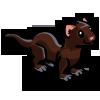 American Mink 美洲貂