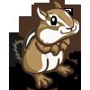 Chipmunk 花栗鼠