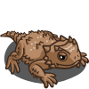 Horned Toad 角蜥(角蟾蜥)