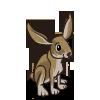 Jackrabbit 長耳大野兔(傑克兔)