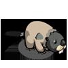 Marmot 土撥鼠