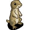 Prairie Dog 草原土撥鼠