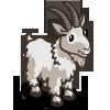 Mountain Goat 北美野山羊