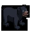 American Black Bear 美洲黑熊
