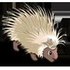 White Porcupine 白豪豬