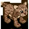 Bobcat 山貓