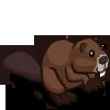 Beaver 海狸