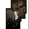 Caribou 北美馴鹿