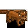 Jaguarundi 美洲山貓(細腰貓)