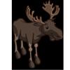Moose Bulls 公駝鹿