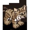 Lynx 大山貓