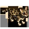 Margay 虎貓