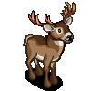 Mule Deer 長耳鹿