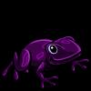 Purple Frog 紫色青蛙