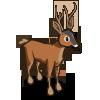 Roe Deer 獐鹿