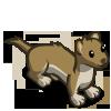 Weasel 黃鼠狼