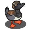 duck_gadwell.png